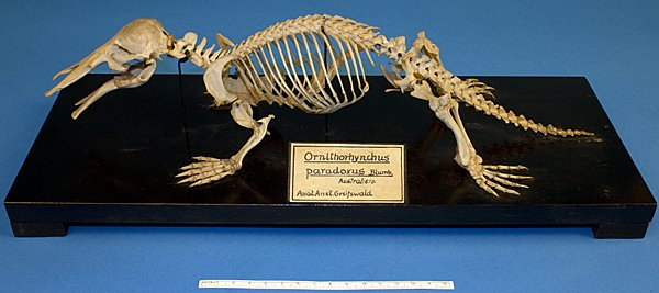 Single View :: Scientific collections of the University of Greifswald